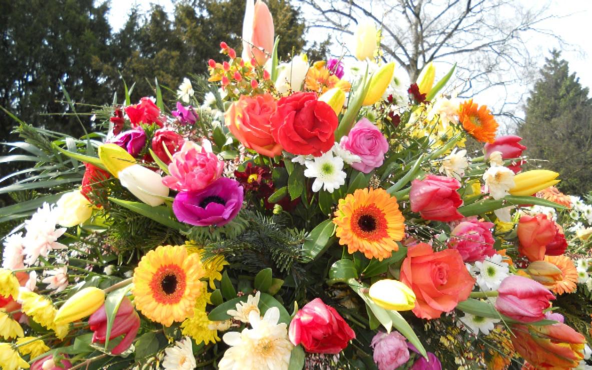 Foto Blumen 2013